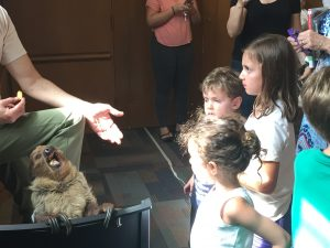 Mammals and More Steve Sloth